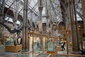 Pitt Rivers Oxford review