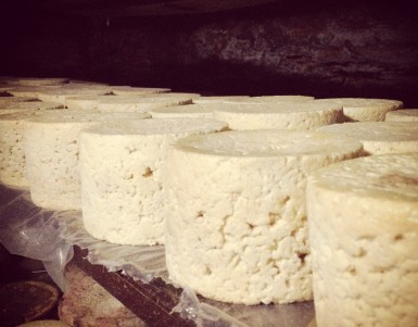 cheese factory tours