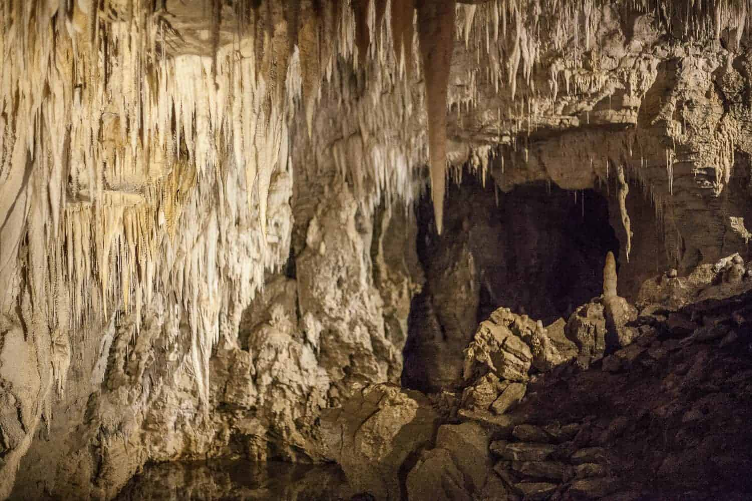 Waitomo cave tour review